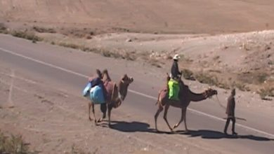 Photo of جهانگرد آذربایجانی سفر دور دنیا را با شتر دوکوهانه آغاز کرد