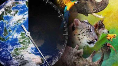Photo of نزدیک به یک میلیون گونه در معرض خطر انقراض در طبیعت هستند