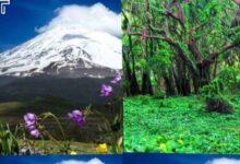 Photo of سازمان اوقاف همراه با دماوند یکی از باارزشترین جنگلهای ایران را نیز تملک کرد