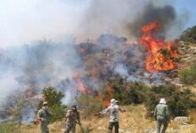 Photo of Количество пожаров в Казвине увеличилось в четыре раза