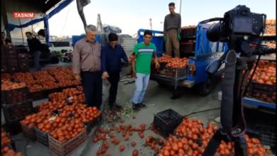 Photo of Производители помидоров не могут продавать свою продукцию