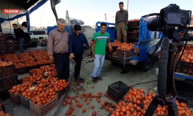 Photo of Tomato growers cannot sell their products