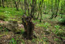 Photo of На охрану Гарадагских лесов бюджета не выделялось