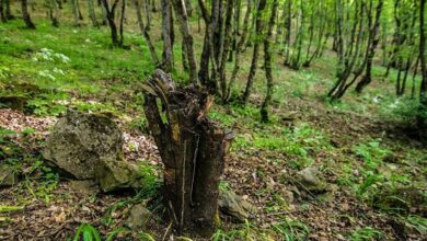 Photo of No budget has been allocated for the protection of Garadagh forests
