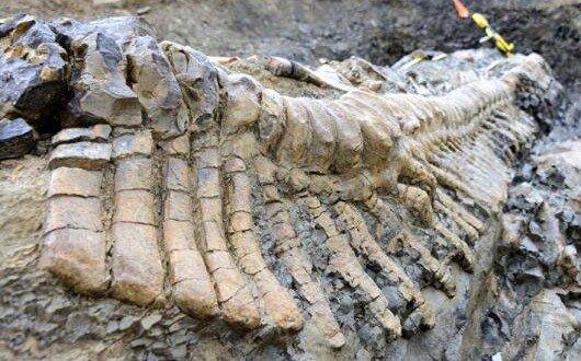 فسیلهای ۷ میلیون ساله مراغه، لنگ ۷ میلیارد اعتبار • Aznews TV